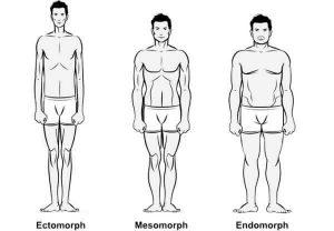 The three main body types