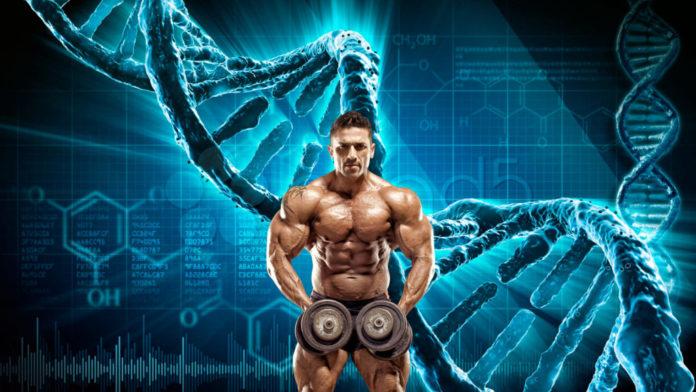genetics and bodybuilding